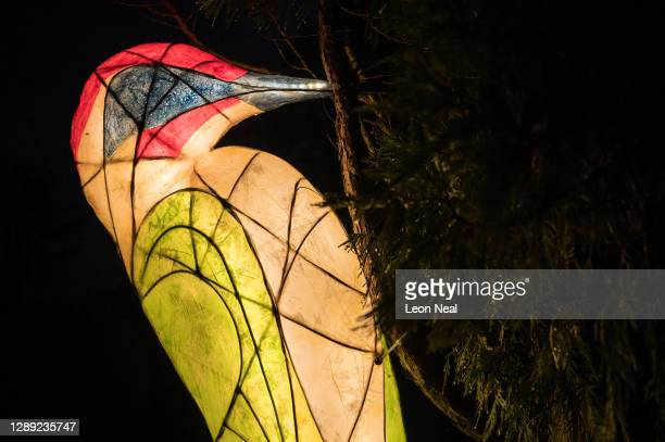 """Glowing model woodpecker is seen attached to a tree during the launch of """"Glow Wild"""" at Wakehurst on December 03, 2020 in Haywards Heath, England...."""