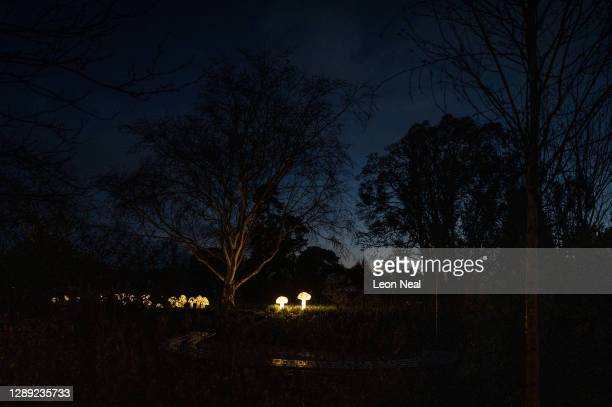 """Glowing mushrooms are seen in the undergrowth during the launch of """"Glow Wild"""" at Wakehurst on December 03, 2020 in Haywards Heath, England...."""