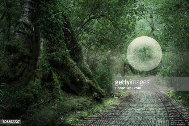 Glowing orb floating in forest over binary code path