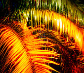 glowing palm leaves
