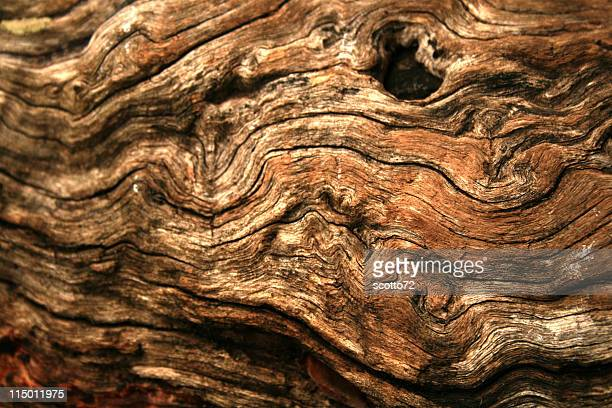 gnarly wood texture - log stock pictures, royalty-free photos & images