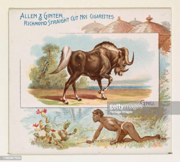 Gnu, from Quadrupeds series for Allen & Ginter Cigarettes, 1890. Artist Allen & Ginter.