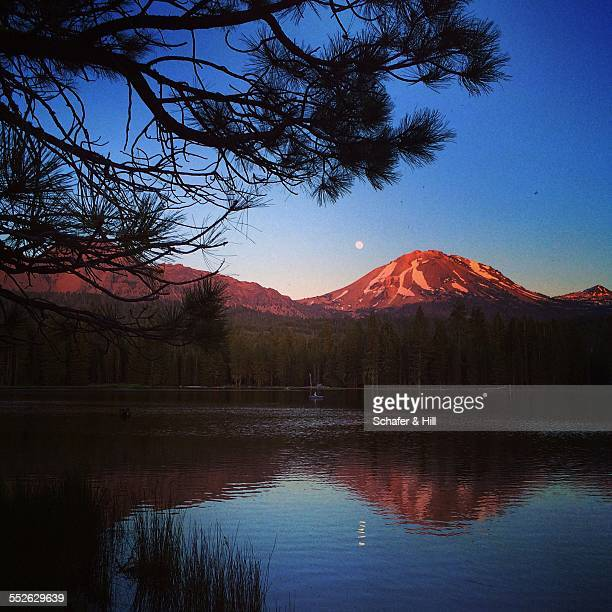 go find your national park - manzanita stock pictures, royalty-free photos & images
