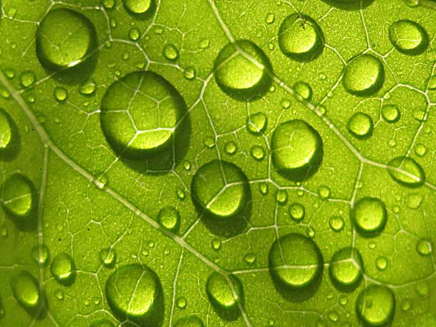 Go Green Wall Art