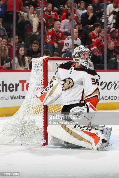 Goalie John Gibson of the Anaheim Ducks looks down the ice in the second period against the Chicago Blackhawks at the United Center on February 15...