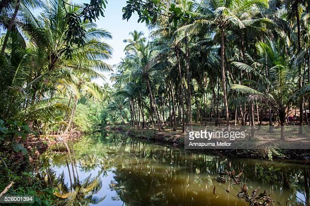 goan backwaters near palolem beach, south goa - annapurna south stock photos and pictures