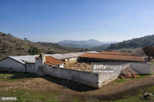 goat barn near new orhanli village. - emreturanphoto stock pictures, royalty-free photos & images