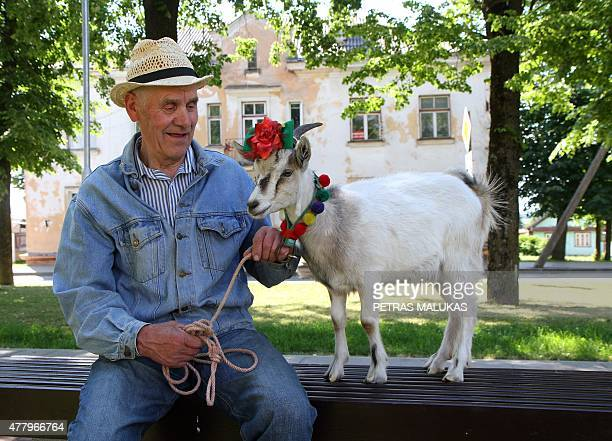 Goat Demele and its owner wait for the start of a goat parade prior to a goat beauty contest in Ramygala Lithuania on July 20 2015 Ramygala was...