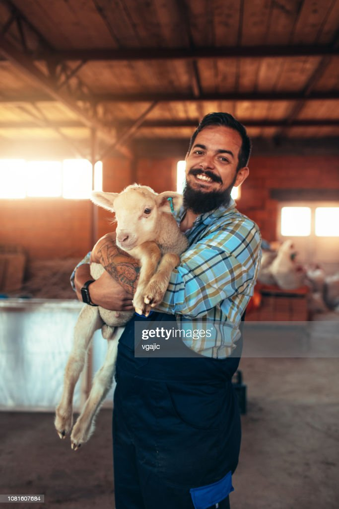 Goat Farm Stock Photo - Getty Images