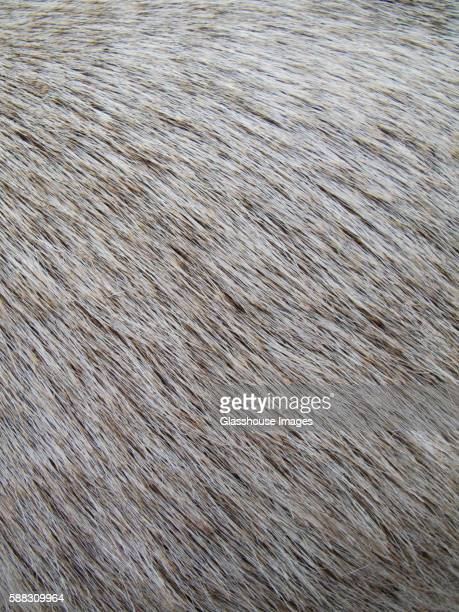 Goat Hair, Close Up