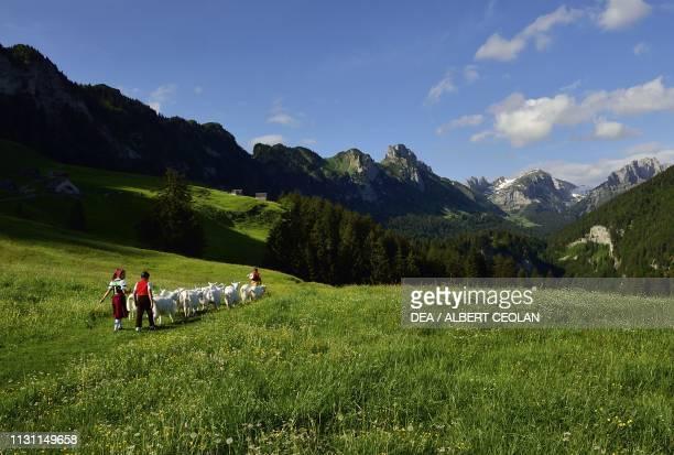 Goat herd and shepherds near Lake Samtisersee Canton of Appenzell Innerrhoden Switzerland