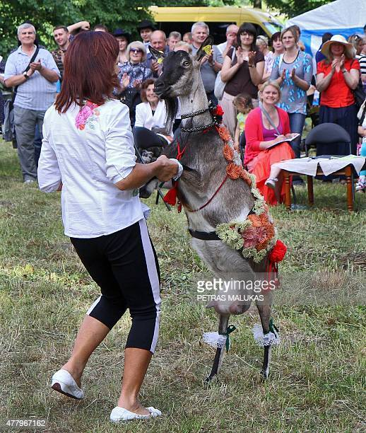 Goat Marce dances with her owner after winning a goat beauty contest in Ramygala Lithuania on July 20 2015 Ramygala was called the capital of Goats...
