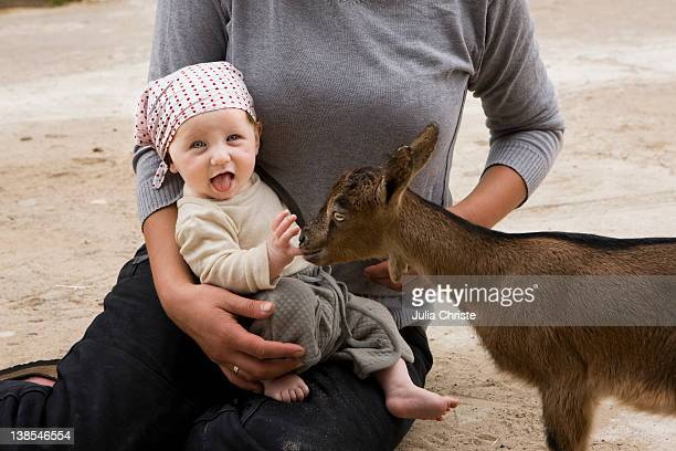 A goat nibbling on a baby's finger