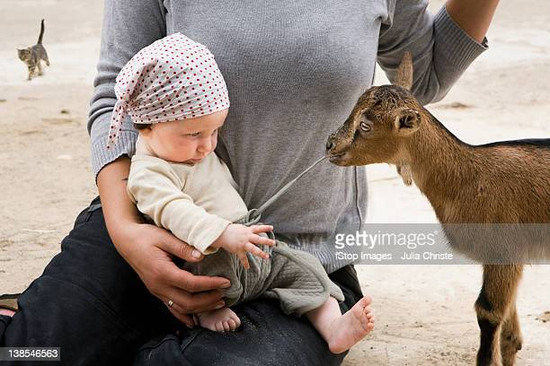 A goat pulling on the drawstring of a baby's pants