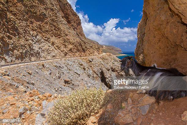 Goat Resting On Rock Formations Against Sky