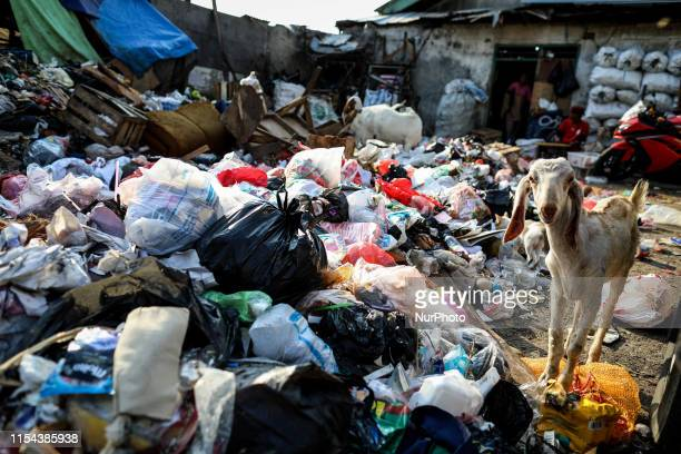 A goat search for food amongst garbage around the traditional market in Jakarta Indonesia on July 7 2019 Plastic pollution in Indonesia is second...