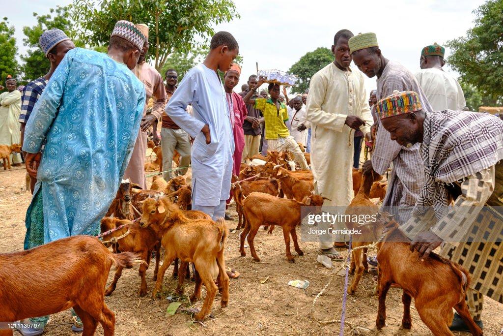 Goat sellers in the Birnin Kudu market... : News Photo