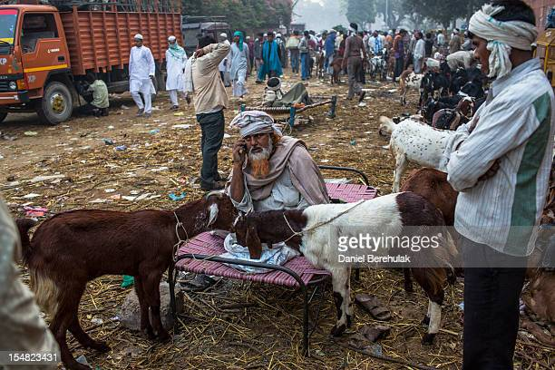 A goat vendor waits for customers as goats are offered for sale for Eid alAdha near to the Jama Masjid on October 27 2012 in New Delhi India Eid...