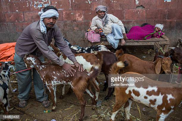 Goat vendors wait for customers as goats are offered for sale for Eid alAdha near to the Jama Masjid on October 27 2012 in New Delhi India Eid alAdha...