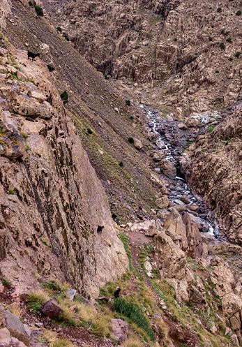 Goat walks freely on Atlas slopes 628246850