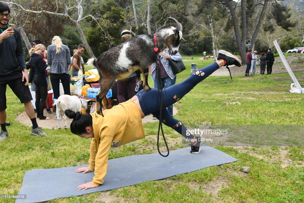 Party Goats LA Baby Goat Spring Picnic : News Photo