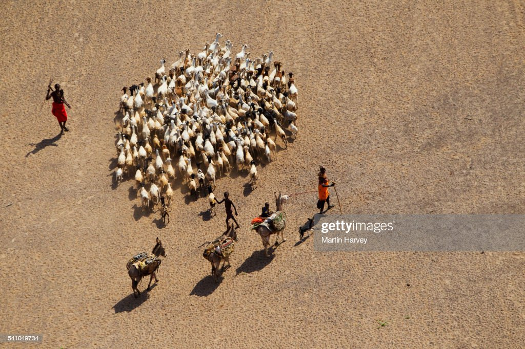 Goats and donkeys at the Koroli springs in the Chalbi desert north of Kenya near the border with Ethiopia : Stock Photo