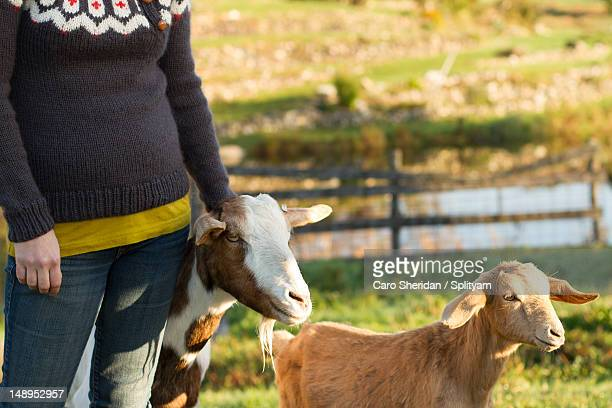 goats and handknits - mid section stock photos and pictures
