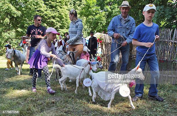 Goats are presented to competition judges during a goat beauty contest in Ramygala Lithuania on July 20 2015 Ramygala was called the capital of Goats...