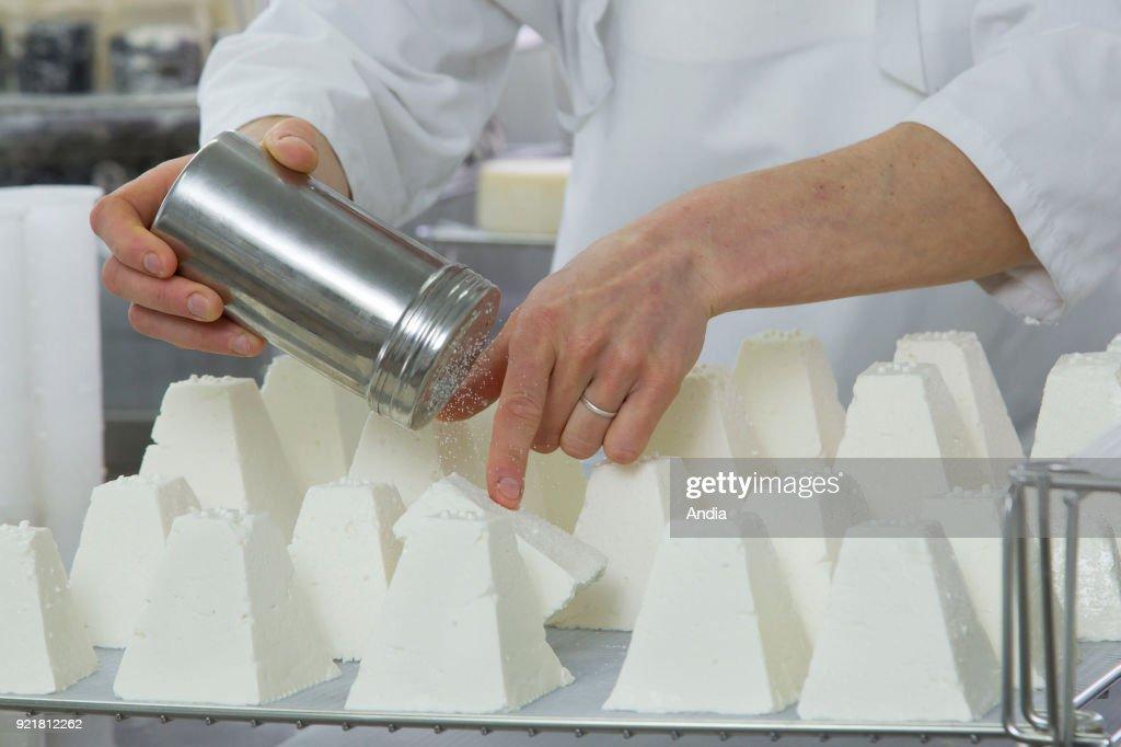 Goat's cheese making. : News Photo