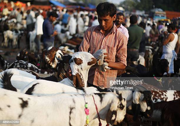 Goats displayed for sale at a market outside the Jama Masjid mosque ahead of the Eid AlAdha festival on September 22 2015 in New Delhi India Muslims...