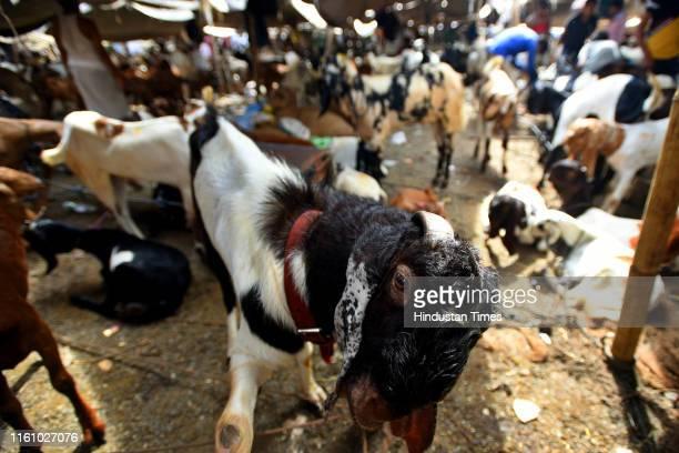 Goats for sale at a makeshift livestock market ahead of Eid al-Adha, at Meena Bazaar, on August 11, 2019 in New Delhi, India. Eid al-Adha is...