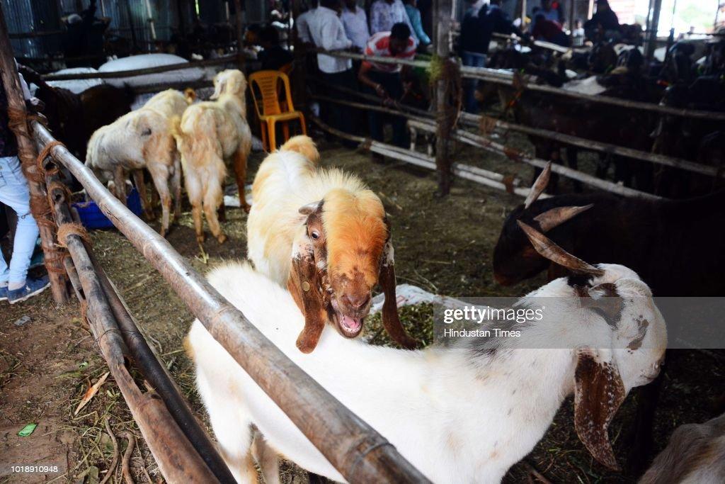 Pune Livestock Market Ahead Of Muslim Festival Eid Al-Adha