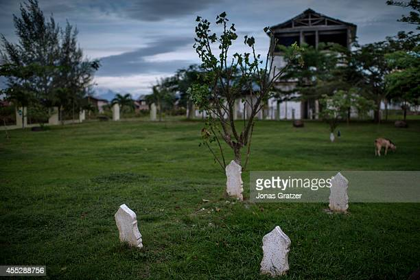 Goats graze above the dust of 14800 nameless dead None of the corpses were identified before they were put in the ground as the numbers were too high...
