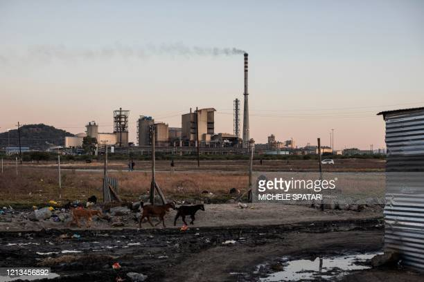 Goats graze in the Wonderkop settlement in Marikana near Rustenburg on May 15 with the SibanyeStillwater platinum mine in the background The mines...