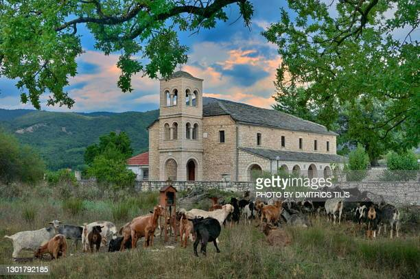 goats in front of a church - dimitrios tilis stock pictures, royalty-free photos & images