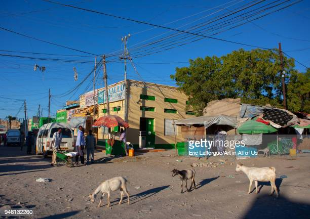 Goats in the streets Woqooyi Galbeed region Hargeisa Somaliland on November 19 2011 in Hargeisa Somaliland