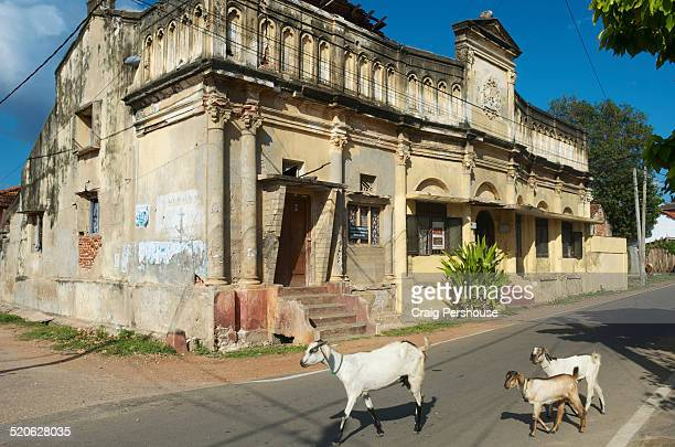 Goats on street outside old theatre