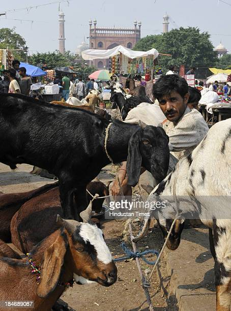 Goats ready to be sold ahead of Bakri Eid outside Jama Masjid on October 15 2013 in New Delhi India Eid alAdha or festival of the sacrifice is...
