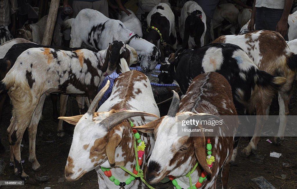 Celebrations Of Islamic Festival Bakri-Eid : Nachrichtenfoto
