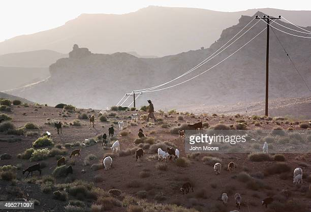 Goats seek out grazing material at sunset on May 30 2014 near the village of Nasrabad in central Iran This week marks the 25th anniversary of the...