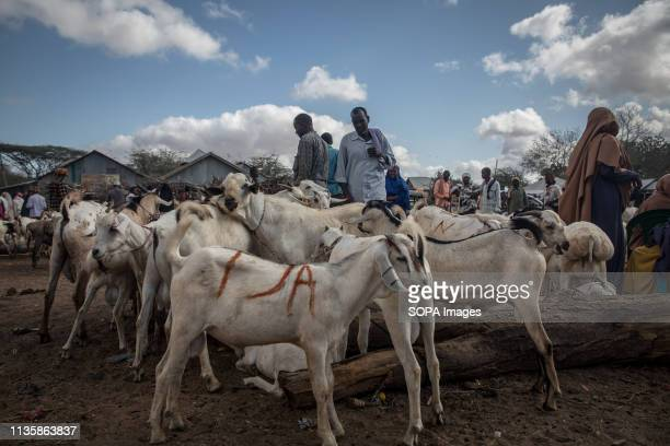 Goats seen at a market in the refugee camp. Dadaab is one of the largest refugee camps in the world. More than 200,000 refugees live there - mostly...