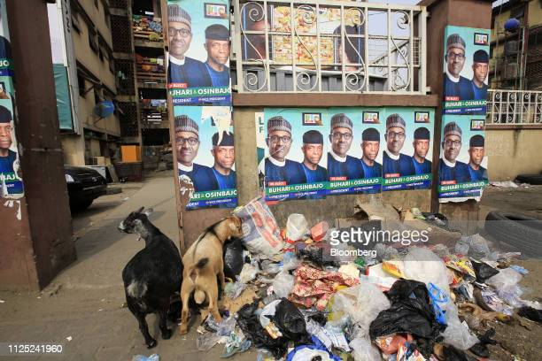 Goats stand near refuse under campaign posters of Muhammadu Buhari Nigeria's president and candidate of the ruling All Progressives Congress party in...