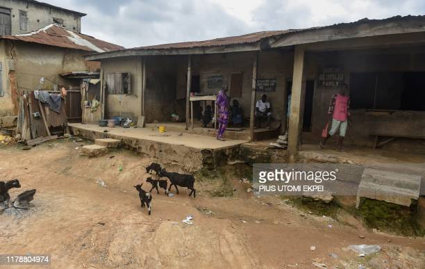 Goats walk past a family compound of the Oloola Descendant Association traditional practitioners of tribal markings in Ibadan southwest Nigeria on...