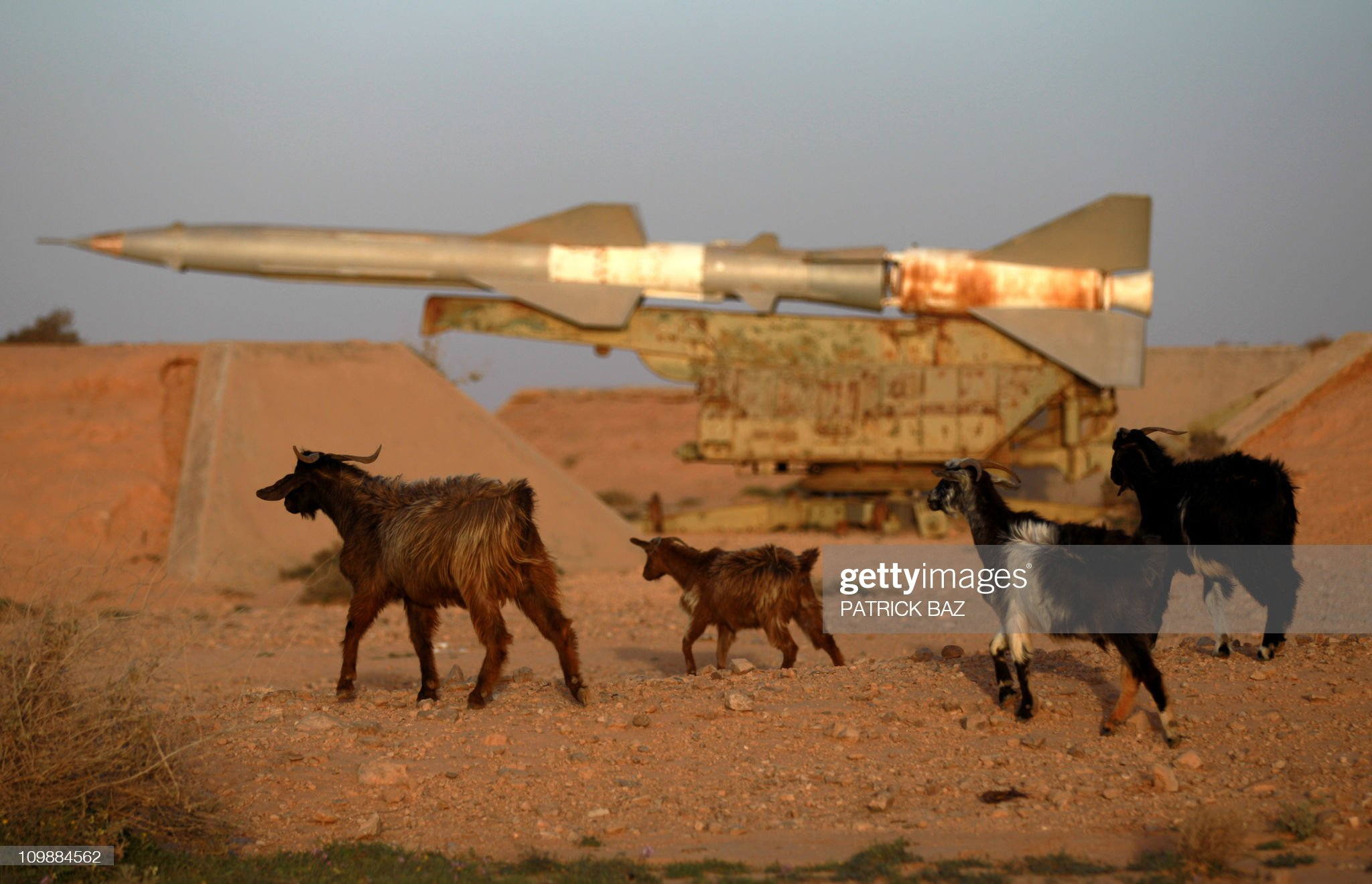 goats-walk-past-a-surfacetoair-missile-a