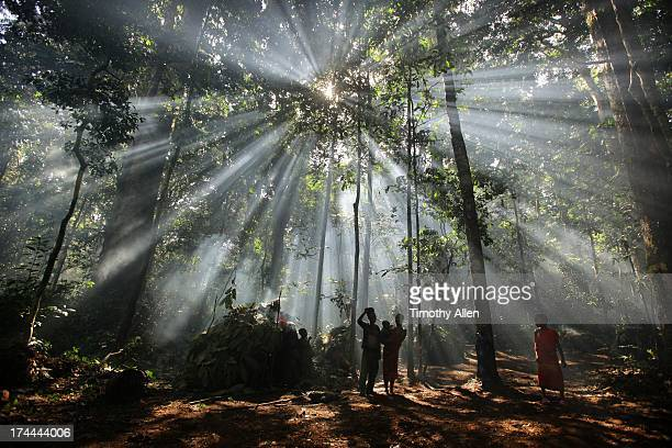 God rays from the sun stream through jungle trees