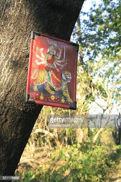 Goddess Durga photo frame on tree trunk in Sanjay Gandhi National Park, Borivali, Bombay Mumbai, Maharashtra, India