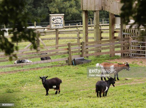 Godstone Children's farm lies empty after an Ecoli outbreak on September 13 2009 near Godstone England Godstone Children's Farm has been closed by...