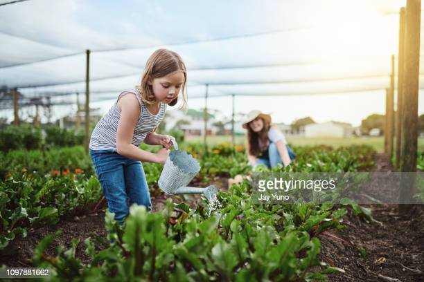 going organic - watering stock pictures, royalty-free photos & images