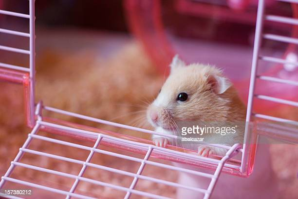 sortir - hamster photos et images de collection