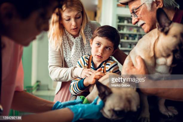 going to the vet - two animals stock pictures, royalty-free photos & images